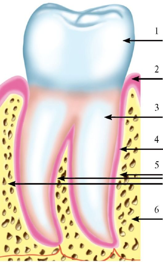 Снятие зубных отложений. Аэрозоль-контроль.