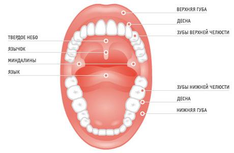 Подвижность слизистой оболочки полости рта