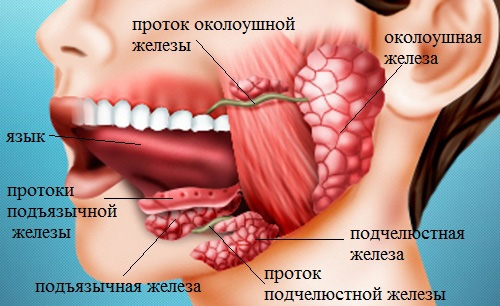 Топография подъязычной, позадимолярной и позадиальвеолярной области