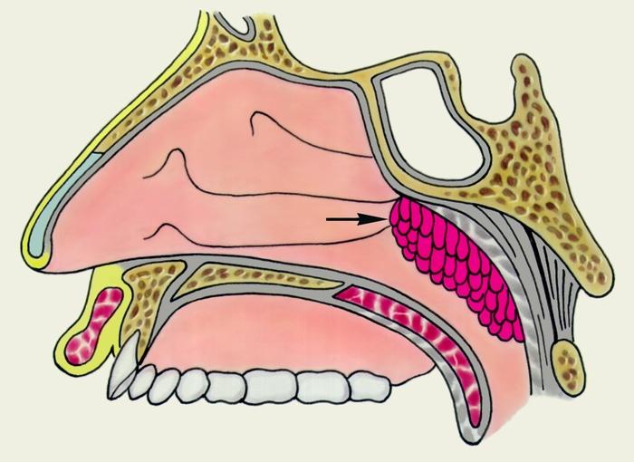 Сагиттальные движения челюсти