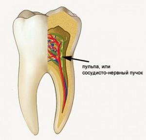 Пульпа зуба и ее повреждение